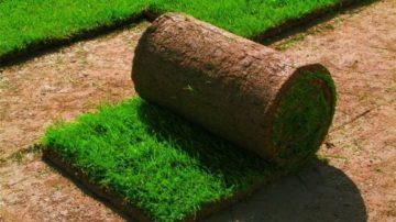 Продажа рулонного газона в Челябинске